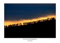 104_juhatanhuaforestfire3.jpg